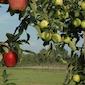 Fruitwandeling