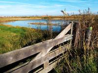 Natuurreservaat Uitkerkse Polder