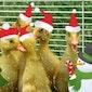 Kerstmarkt Tildonk