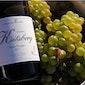 Wijnterras in wijndomein Kitsberg