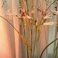 Bloemdecoratie: kaarsvet omarmt takken