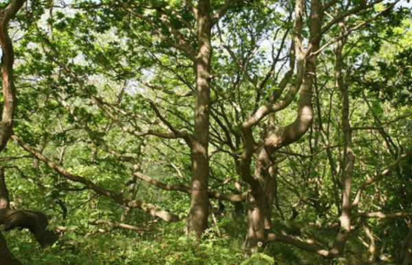 Duinbossen van De Haan