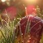 Paddenstoelenwandeling Heidebos - Week van het Bos