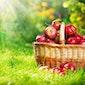 Fruit proeven in de boomgaard