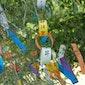 Tanabata  - Wensenfeest