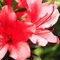 Floraliëntocht