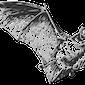 Nacht van de Vleermuis