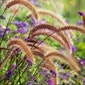 Pientere plantencombinaties