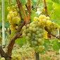 De wijnen van de Loire