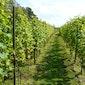 De wijnen uit Languedoc-Roussillon