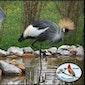 Vogelspeciaalzaak-De Bosruiter