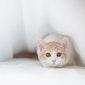 Opleiding 'Omgaan met angstige katten'