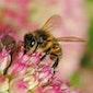 Een bijenvriendelijke tuin