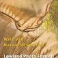 Lowland Photo Festival