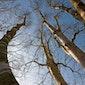 Portretfotografie van bomen                          WACHTLIJST