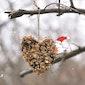 Cupcakes voor vogels