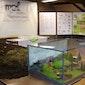 Tentoonstelling inlandse amfibieën
