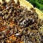 Wilde bijenwandeling - VOLZET
