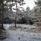 Winterwandeling in Tienbunderbos