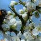 Voorjaarsbloeiers in Vorsdonkbos-turfputten