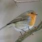 Het Grote Vogelweekend in het Landschap De Liereman