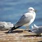 Vogels aan de kust