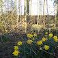 Flora Voorjaarswandeling