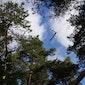 Verhalenwandeling: Geheimen uit het bos