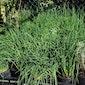 Planten- en zadenruildag