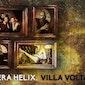 Een avond met Hedera helix