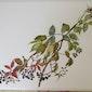 Zomerworkshop impressionistisch aquarelleren - Nationale plantentuin Meise