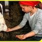 Activak Kinderkamp - Boerderijkamp Pierlapont