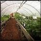 De wondere wereld van plantaardigheden