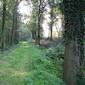 Natuurwandeling :  Voorjaarsbloeiers in de Hondsbossen