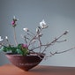 Groene Dromen: Ikebana Tentoonstelling