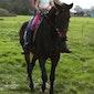 Winterwandeling met paarden voor het hele gezin