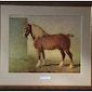 Okra bezoekt het Museum van het Belgisch trekpaard