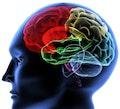 Hoe gebruiken we onze hersenen?
