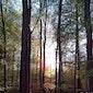 SPECHTENWANDELING Zoniënwoud - Natuurpunt