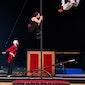Circus in Scènes
