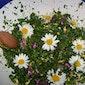 Voeding uit de natuur: Lenteweekend eetbare planten (Oudenaarde)