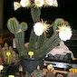 9de beurs voor cactussen en vetplanten