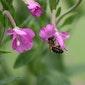 Bouwen voor bijen te Steenberg