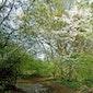 Landschapswandeling in het Hagelands Bos (Tienbunderbos Rillaar)