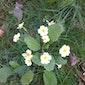 Natuurpunt Brugge: Voorjaarsbloeiers in Loppem