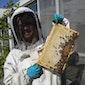 Het belang van bijen