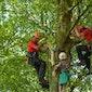 Met zijn allen de boom in