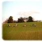 Wandeling met ezels + ezelfilm