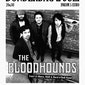 The Bloodhounds (USA)