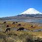 Chili en Argentinië, een reis door het Andesgebergte, filmreportage